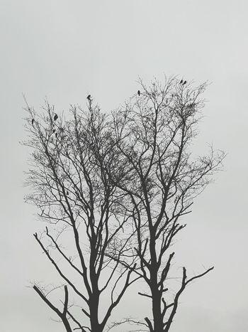 No People Nature Scenics Bare Tree Cloud - Sky Silhouette Tranquility Winter Birds In Tree Birds Vogel Baum