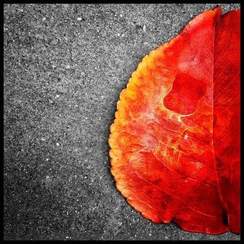 Winter Color. Leaf From Fall Season  Winter Throughmyeyez Red Orange Inchicago Grounded In The City Colors Nature Burning Bright Chicago Chicago Weather