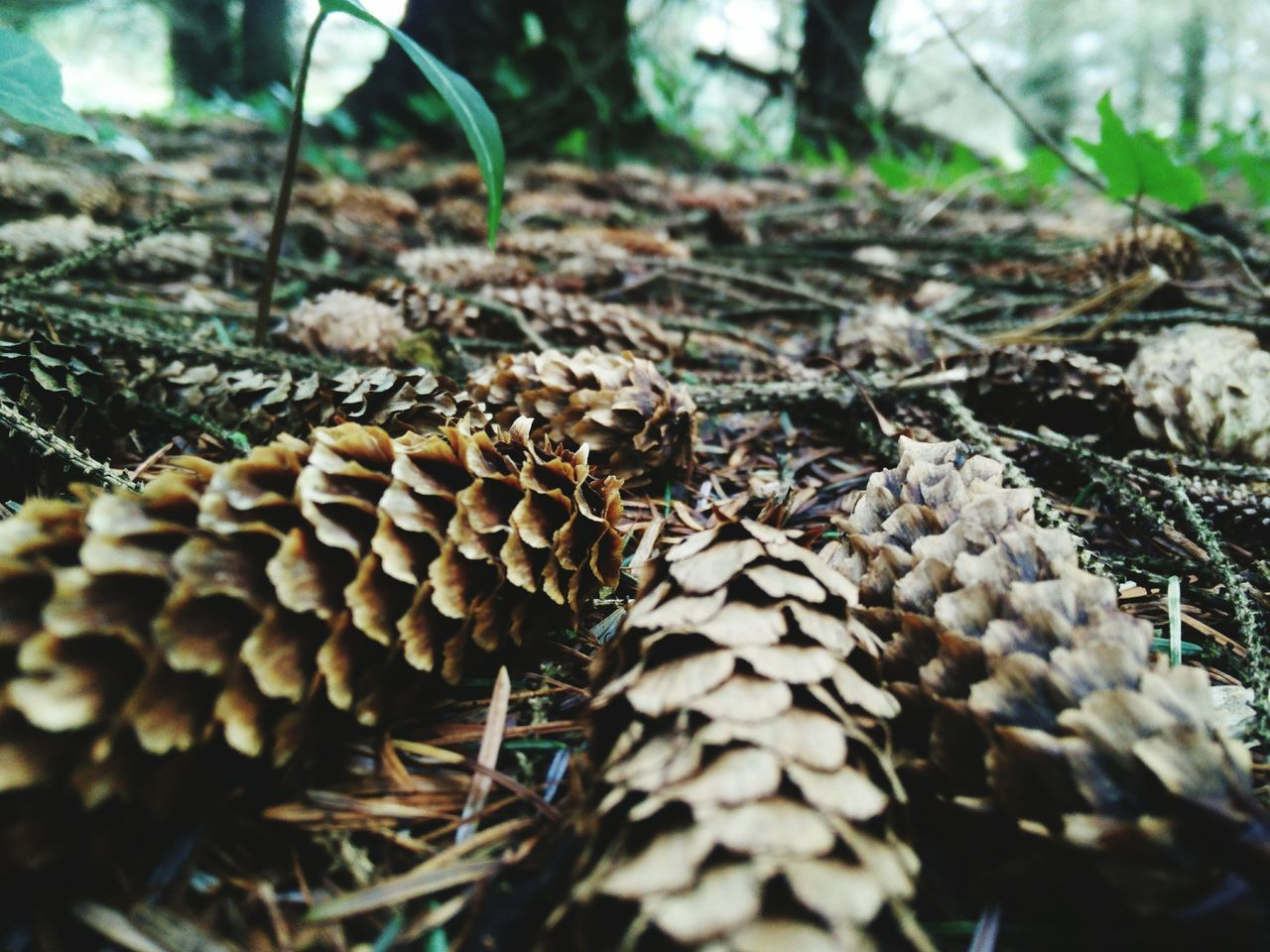 Beautiful stock photos of ireland, Close-Up, Day, Dried Plant, Forest