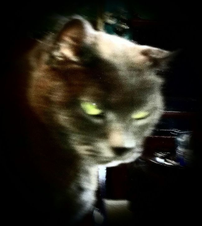 Check This Out Cats Of EyeEm Petslife The Story Behind The Picture or...my cat is a KGB agent
