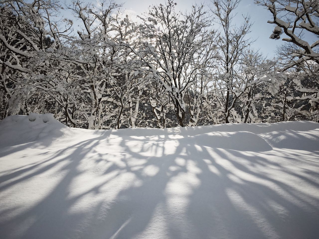Snow Winter IPhone