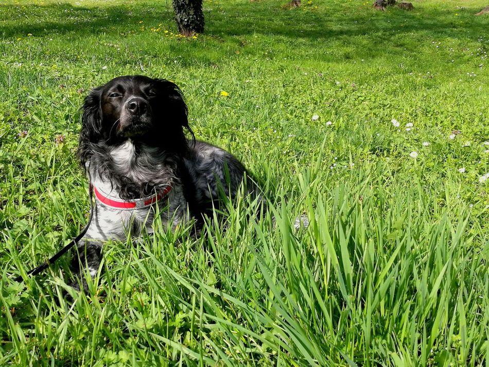 Pets Dog Grass Outdoors Nature Ginevra Lovemydog Domestic Animals Relax