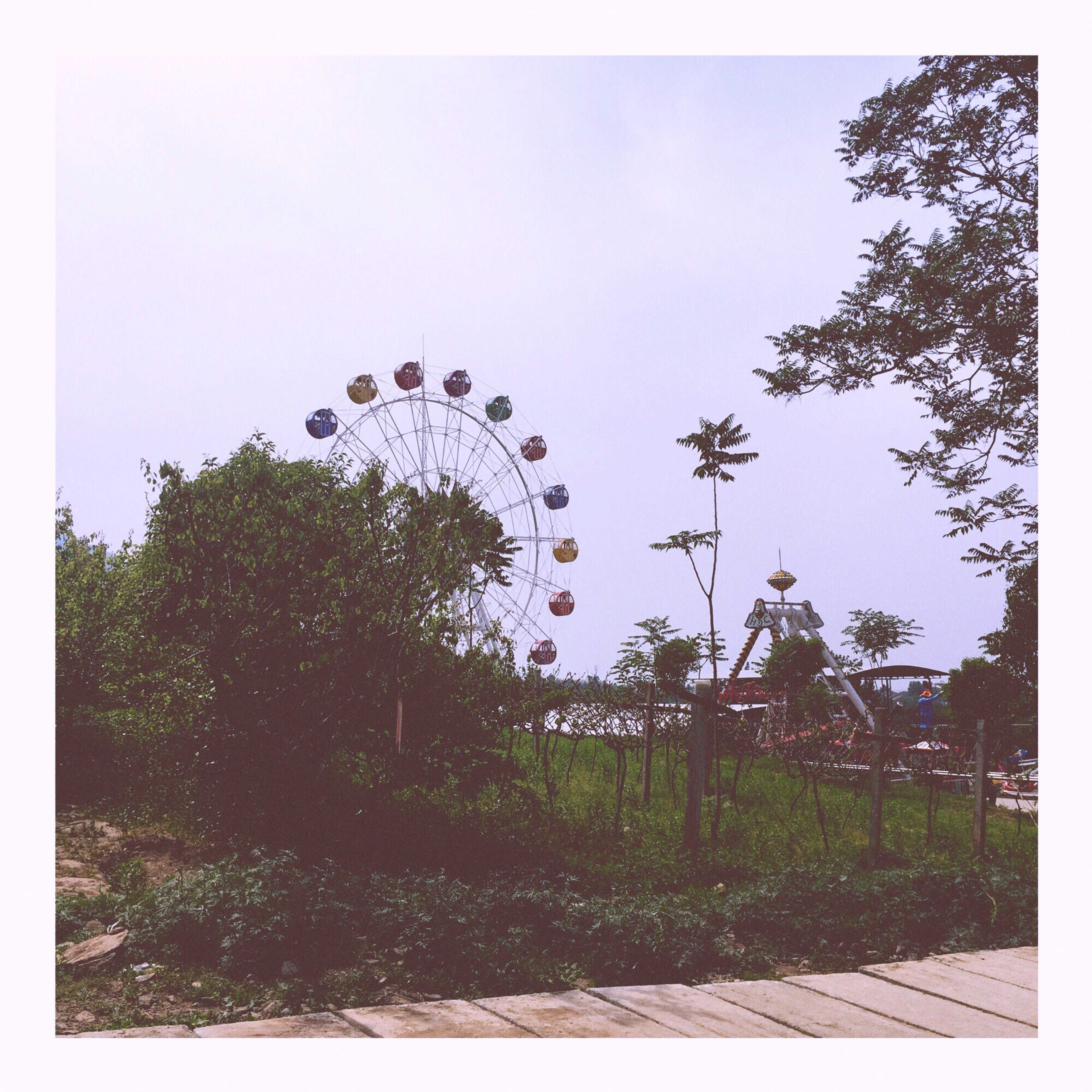 tree, clear sky, transfer print, sky, growth, auto post production filter, copy space, built structure, day, green color, outdoors, circle, low angle view, plant, building exterior, architecture, amusement park, nature, ferris wheel, no people