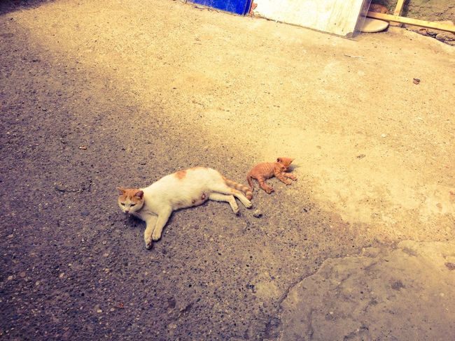 Resting and tired of drinking milk all day.. Sakarya Kocaali EyeEmTurkey Animals Streetphotography Cats Resting Taking Photos Traveling Walking