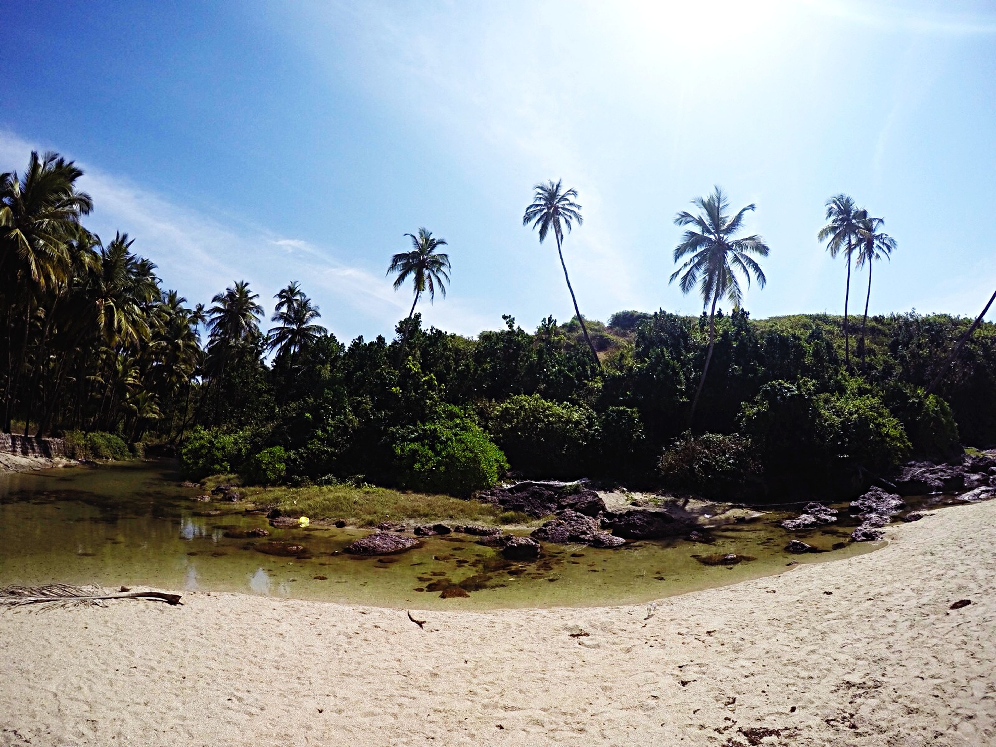 tree, sky, palm tree, tranquility, tranquil scene, beach, growth, scenics, nature, beauty in nature, water, sand, sunlight, shore, day, cloud - sky, blue, non-urban scene, cloud, sea