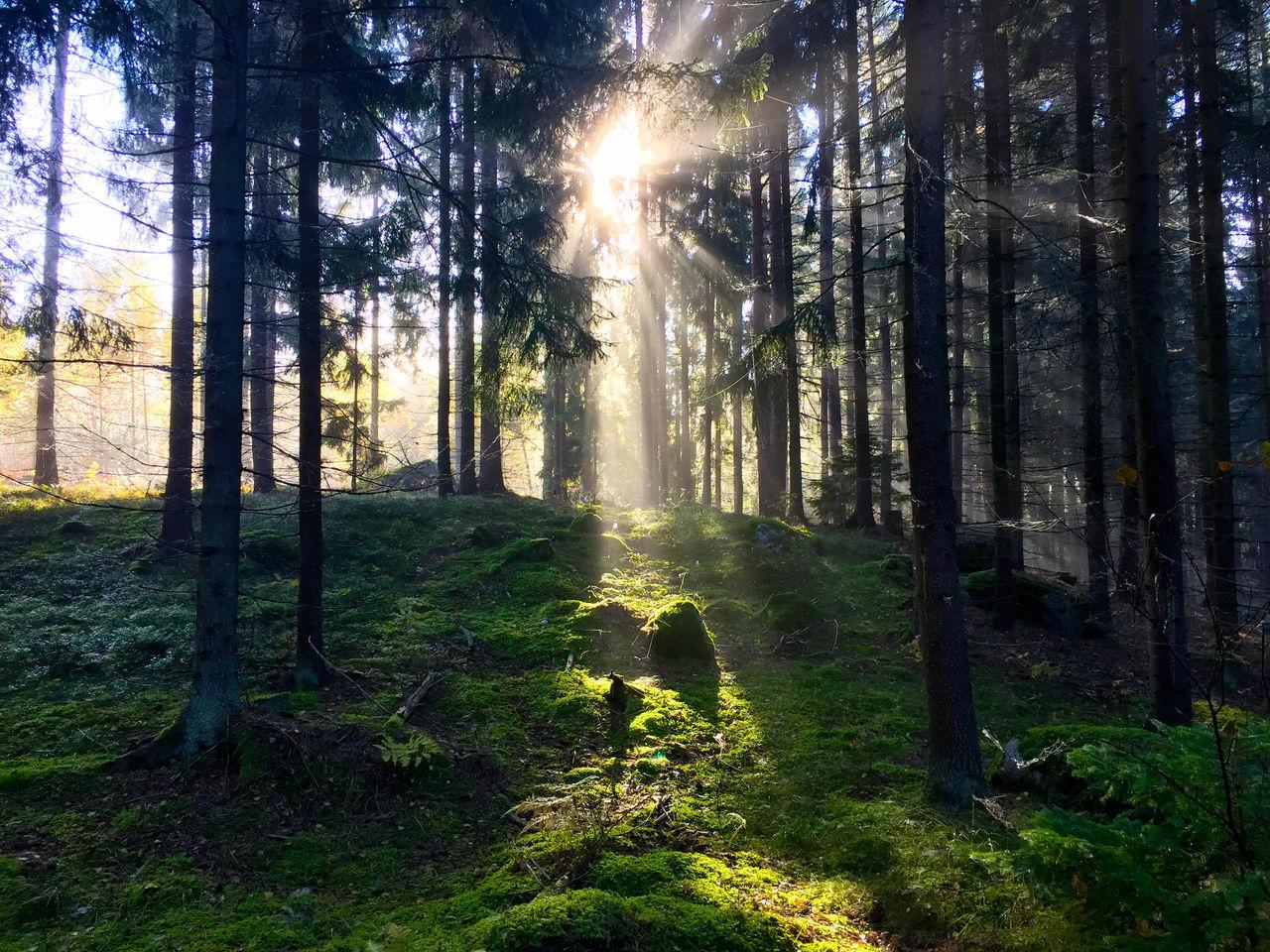 Idyllic Shot Of Sunlight In Forest