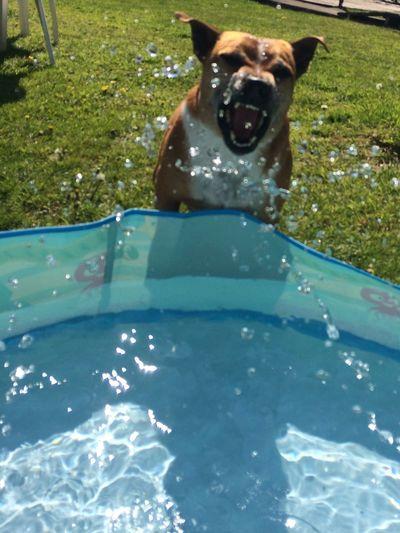 My dog sunshine enjoying the water
