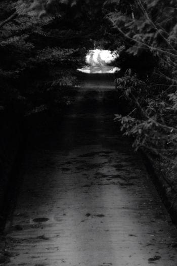 ミチノムコウ Bw_collection Dark Outdoors Oldlens Blackandwhite BW Collection Pentaxk7 Black & White Jupiter9 EyeEm Gallery Beauty In Nature