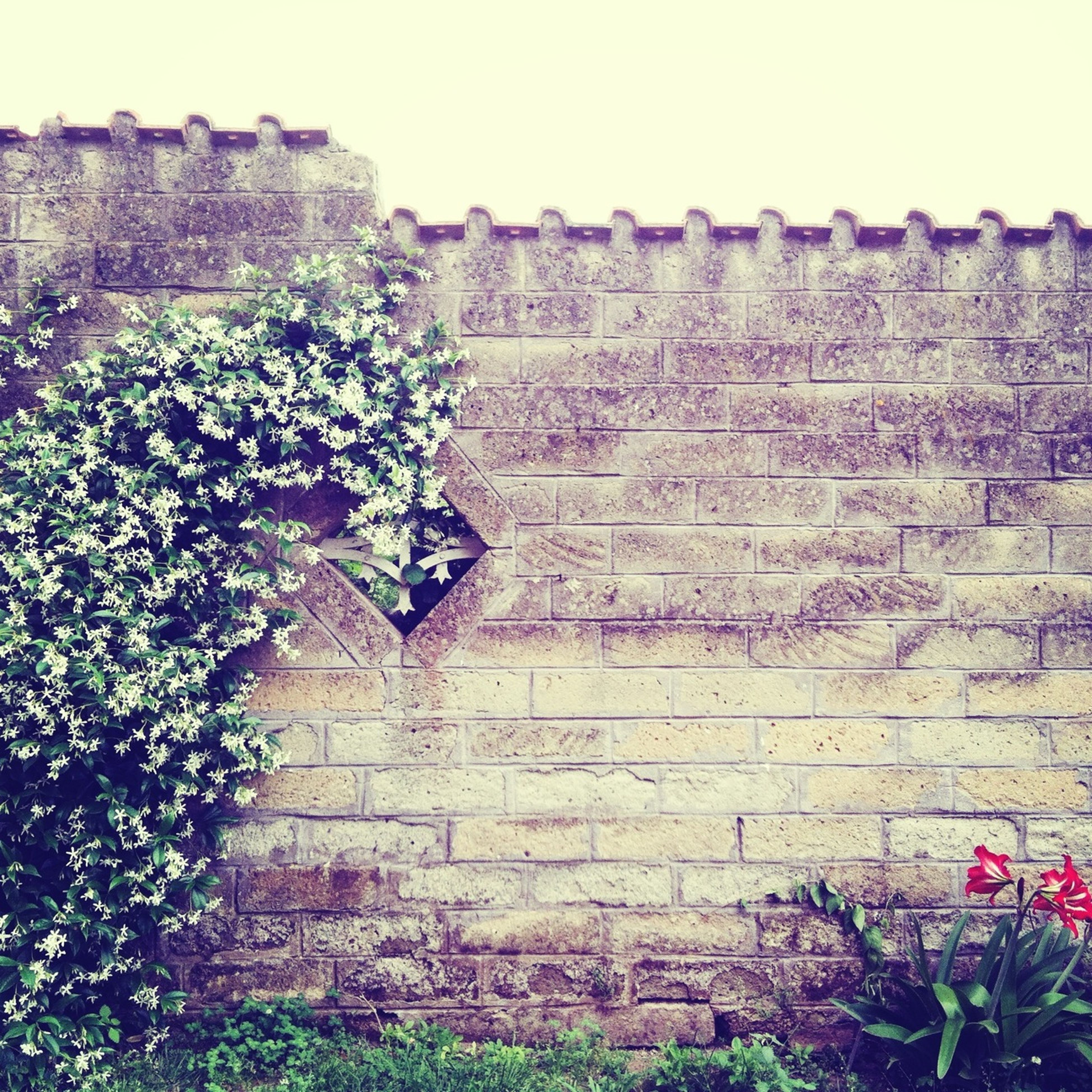 architecture, built structure, building exterior, plant, growth, flower, clear sky, wall - building feature, stone wall, old, brick wall, day, nature, outdoors, no people, house, ivy, wall, history, growing