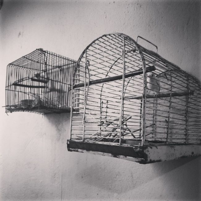 Hope to be free!! Bird Art