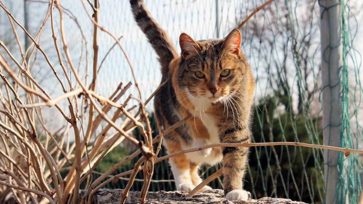 Cat Cats Orange Animals Sun Baffi Zampe Orange Color Photigraphy Photography Shoot Shooting Pet