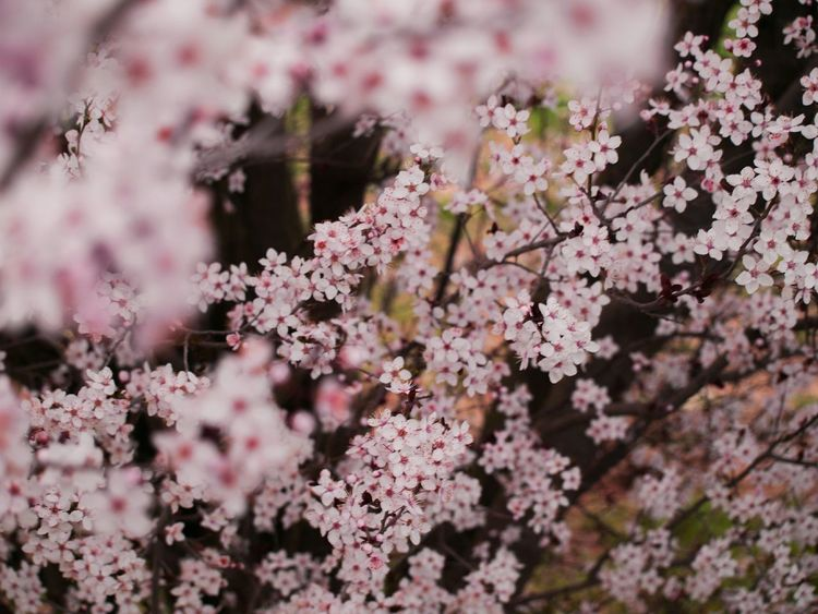Flowers Spring Beautiful Nature Nature Pink Flower March2015 Catalonia Nature Photography Spring Into Spring