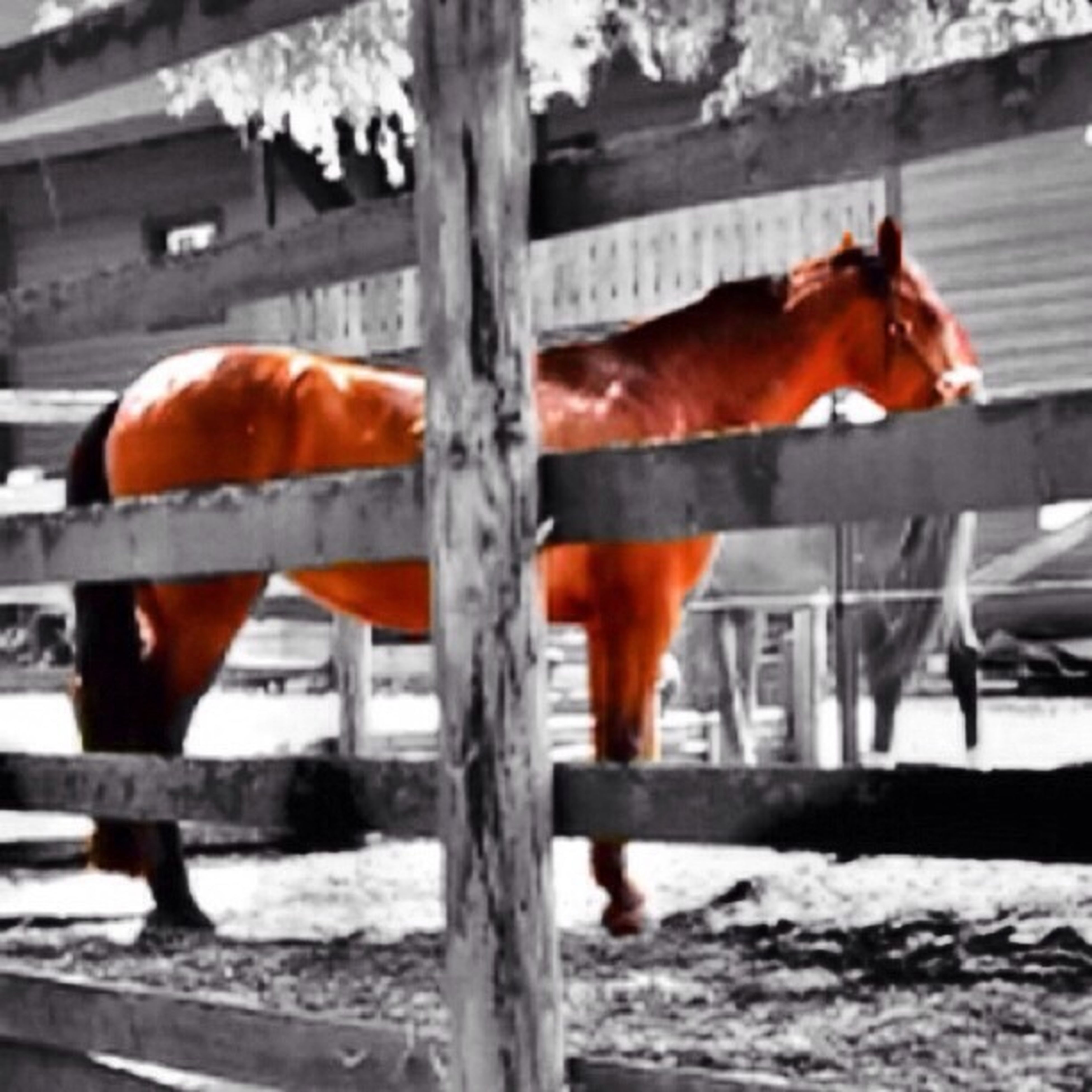 animal themes, livestock, domestic animals, mammal, one animal, fence, brown, two animals, focus on foreground, animals in captivity, zoology, standing, herbivorous, railing, animals in the wild, orange color, horse, side view, close-up, wildlife