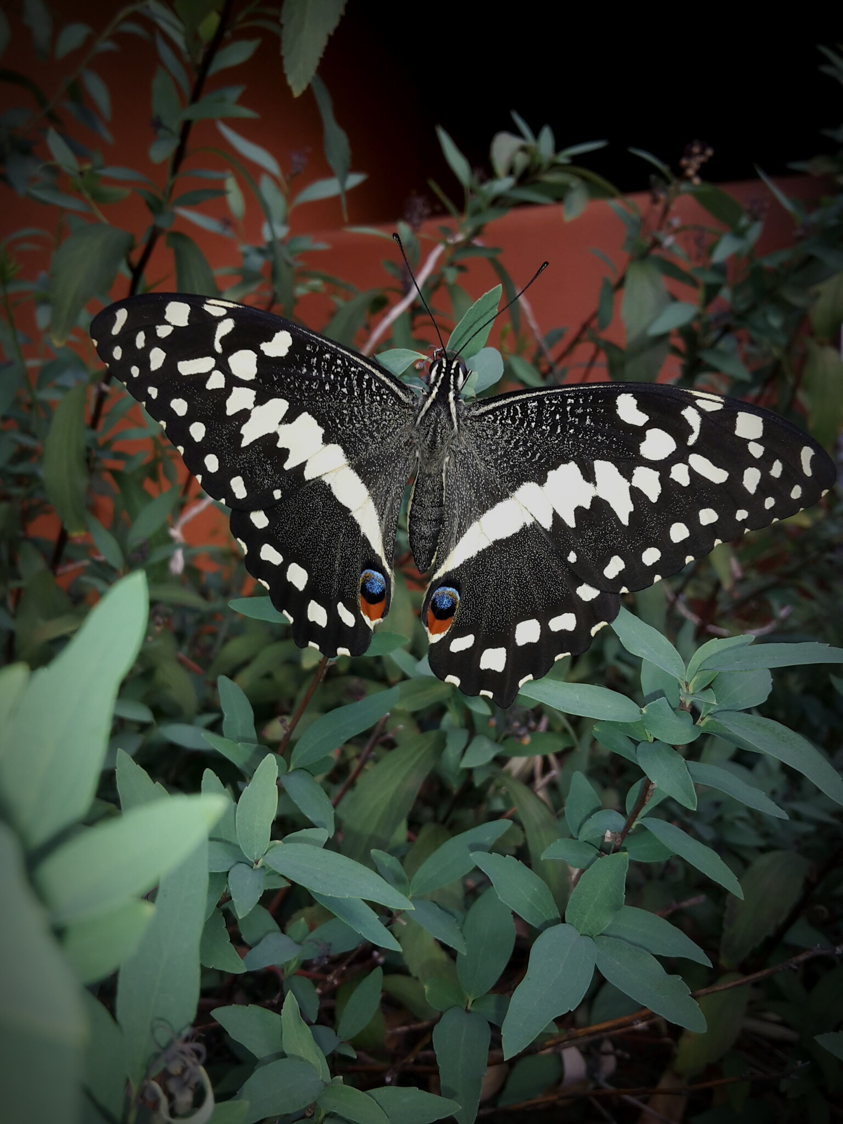 butterfly - insect, one animal, animal themes, insect, animals in the wild, butterfly, animal markings, leaf, wildlife, plant, close-up, nature, natural pattern, spotted, beauty in nature, growth, high angle view, focus on foreground, outdoors, animal wing