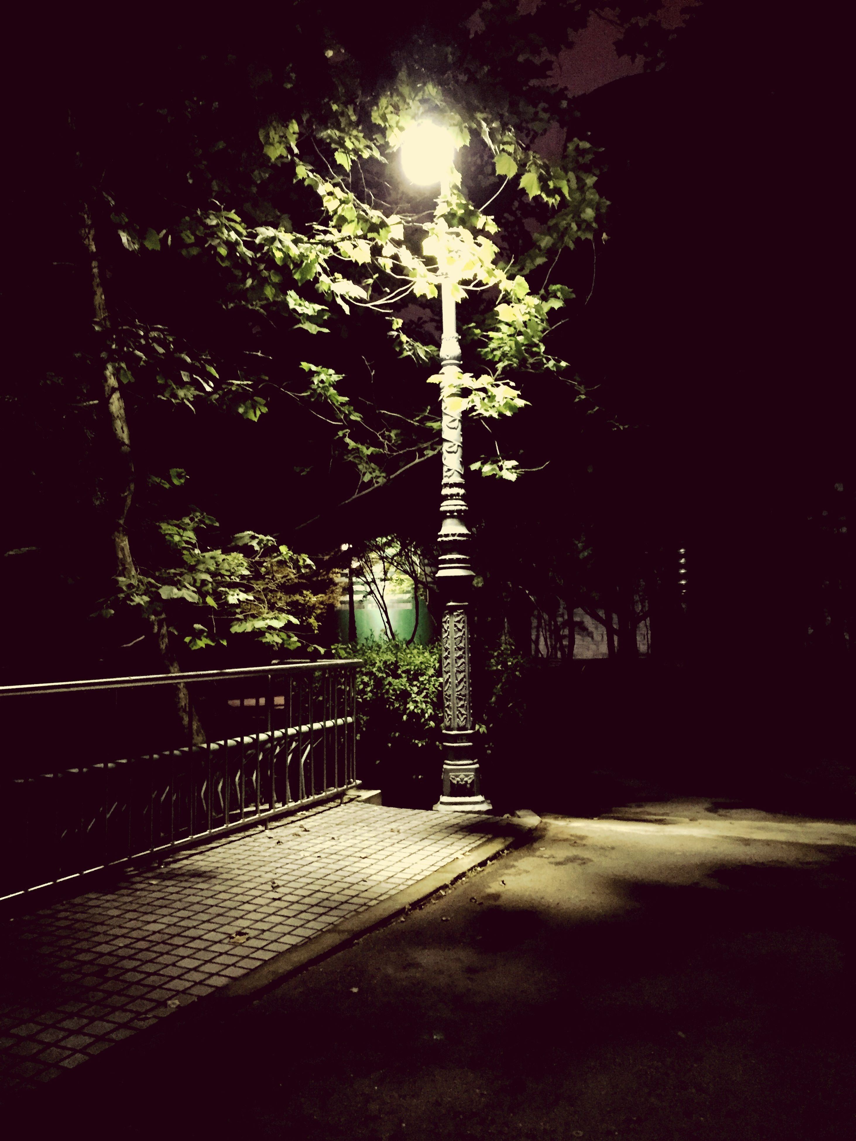 night, illuminated, street light, lighting equipment, tree, the way forward, built structure, street, footpath, empty, architecture, sidewalk, sunlight, building exterior, absence, outdoors, shadow, walkway, no people, railing