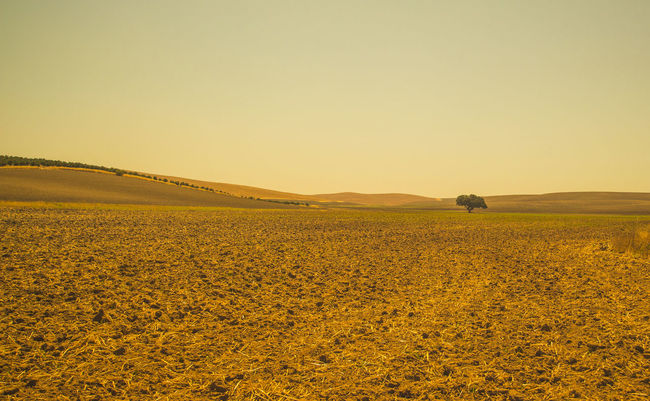 Campina Campiña De Jaén Campos De Cereal Jaen Province Jaen Provincia Openfields