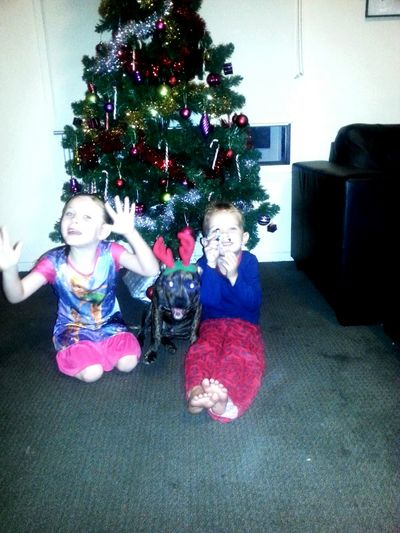 Last Christmas. Maddie, Jakob and Bentley.