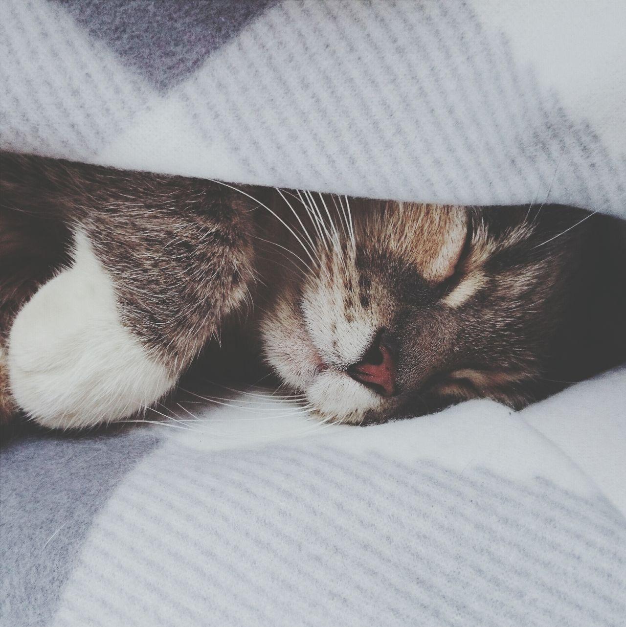 Beautiful stock photos of kitty, Animal, Animal Themes, Cat, Close-Up