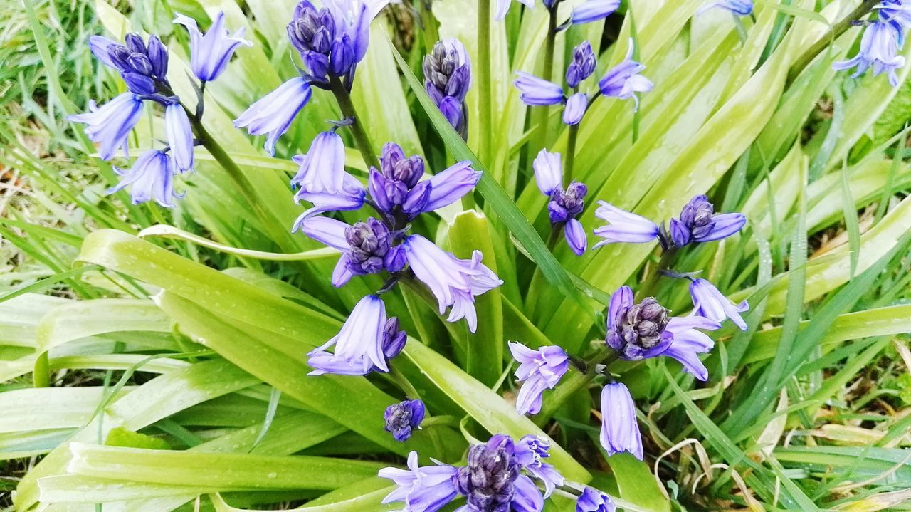 flower, purple, growth, petal, fragility, nature, beauty in nature, freshness, green color, plant, no people, flower head, blooming, outdoors, day, close-up