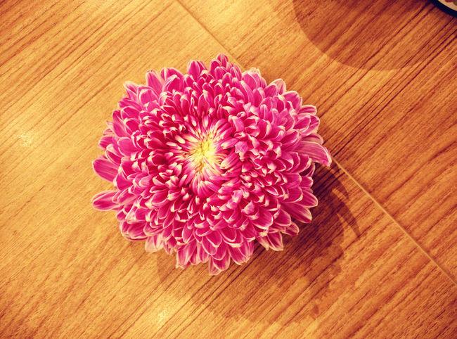 Beautiful ♥ Check This Out Chrysanthemum Eyeem Flower Lover EyeEm Flowers Collection EyeEm Nature Lover Flower Collection Flowers,Plants & Garden Naturelovers Pink Flowers Woodtable