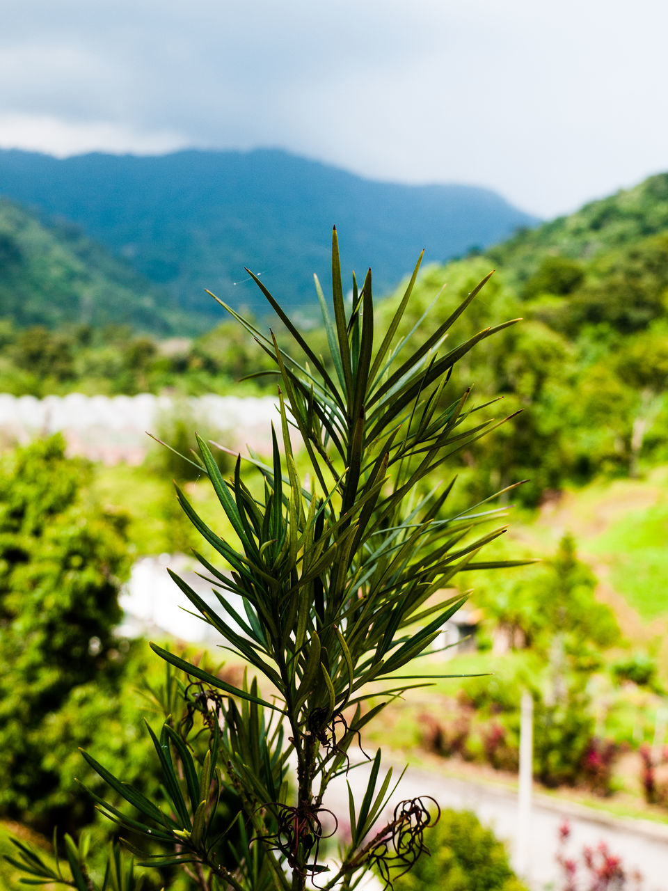 nature, growth, beauty in nature, plant, no people, tranquility, focus on foreground, green color, mountain, day, outdoors, tree, scenics, sky, close-up, freshness