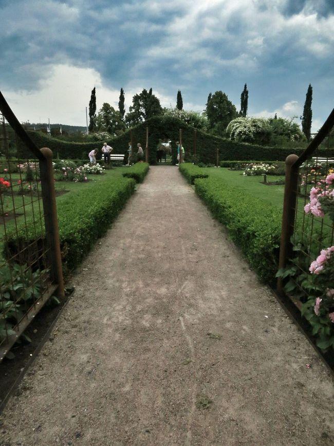 Rosaries Flowers Botanic Garden Rose Garden