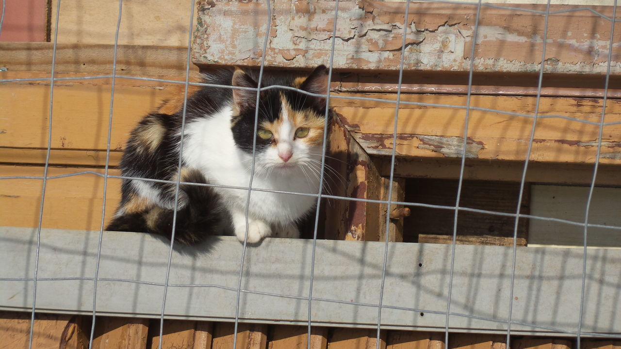 animal themes, one animal, pets, domestic animals, domestic cat, mammal, no people, cage, day, feline, outdoors, close-up