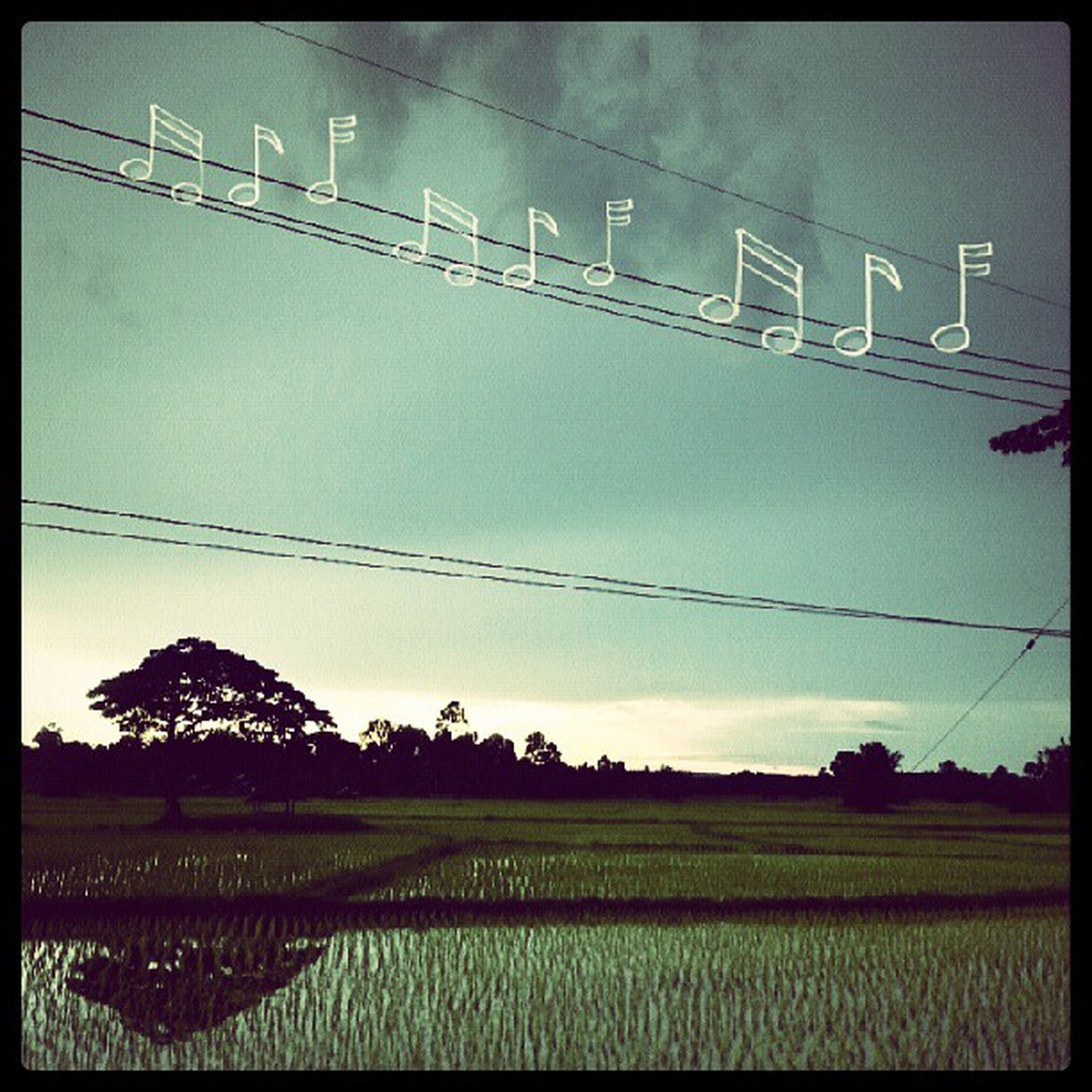 transfer print, field, agriculture, rural scene, auto post production filter, landscape, sky, farm, power line, growth, nature, tree, electricity pylon, crop, cultivated land, tranquility, clear sky, tranquil scene, grass, no people