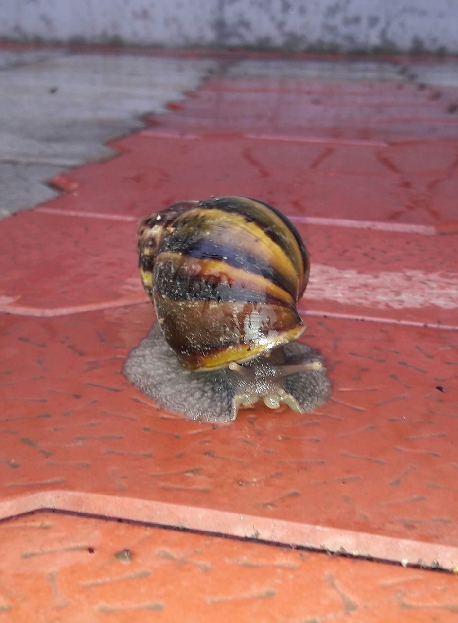 one animal, animal themes, snail, animals in the wild, wildlife, no people, day, outdoors, close-up, gastropod, nature, beach, beauty in nature, fragility
