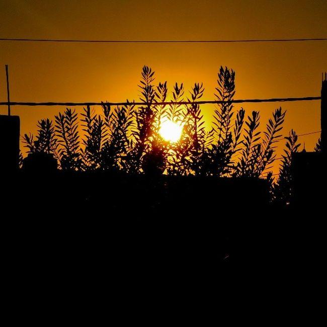Sun Sunset Sky Sky_masters sky_love tree instasky skygram skymasters skyviewers amman seeamman seejordan beamman bejordan spiritofjordan spiritofamman beautifuljordan beautifulamman