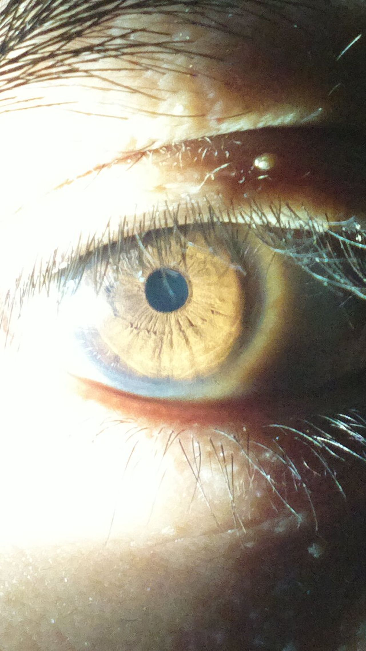 Adult Adults Only Close-up Day Eyeball Eyelash Eyesight Human Body Part Human Eye Indoors  One Person People Real People Sensory Perception Eyeem Philippines