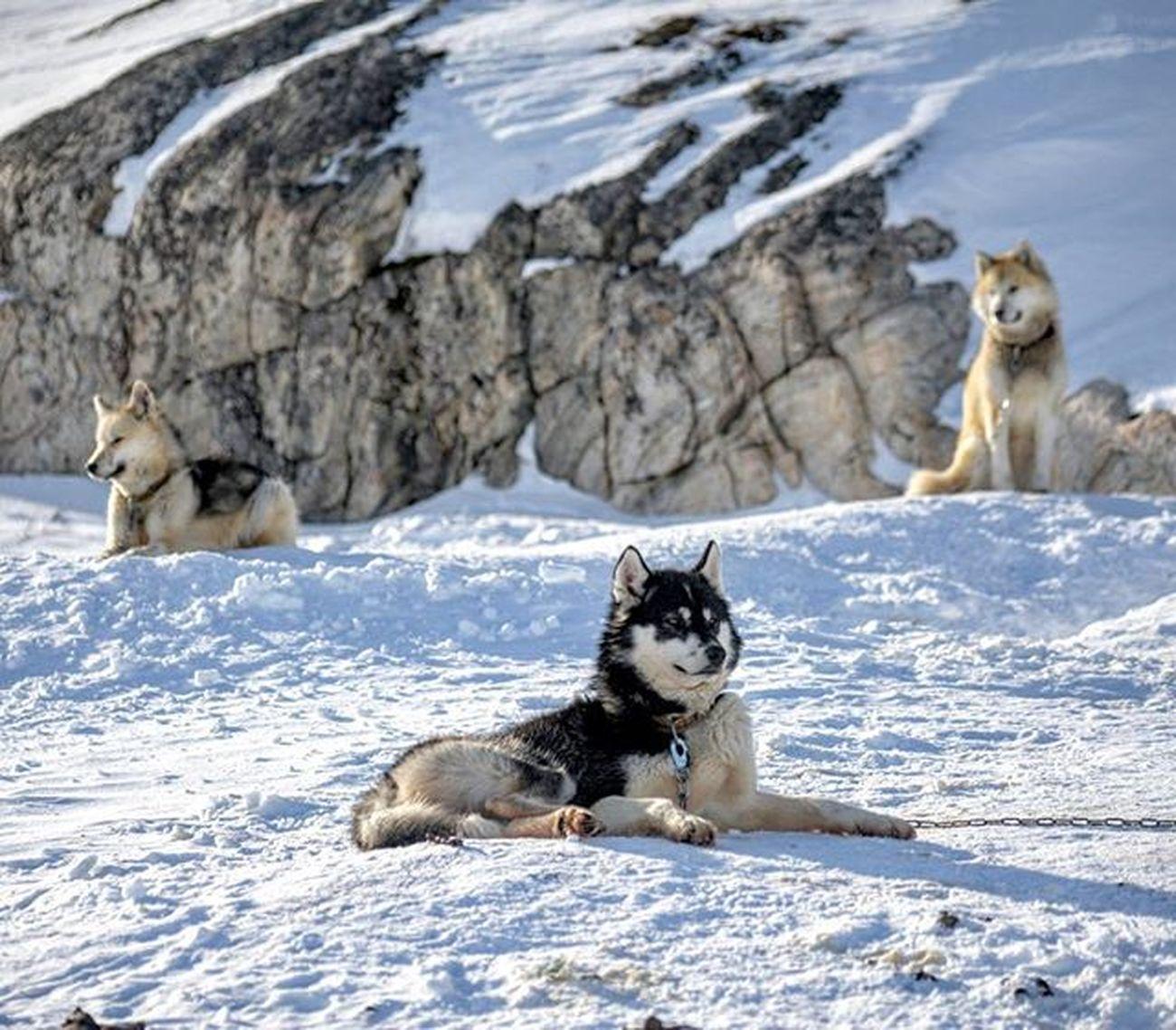 Chilling. Greenland Kalaallitnunaat Ilulissat Latergram