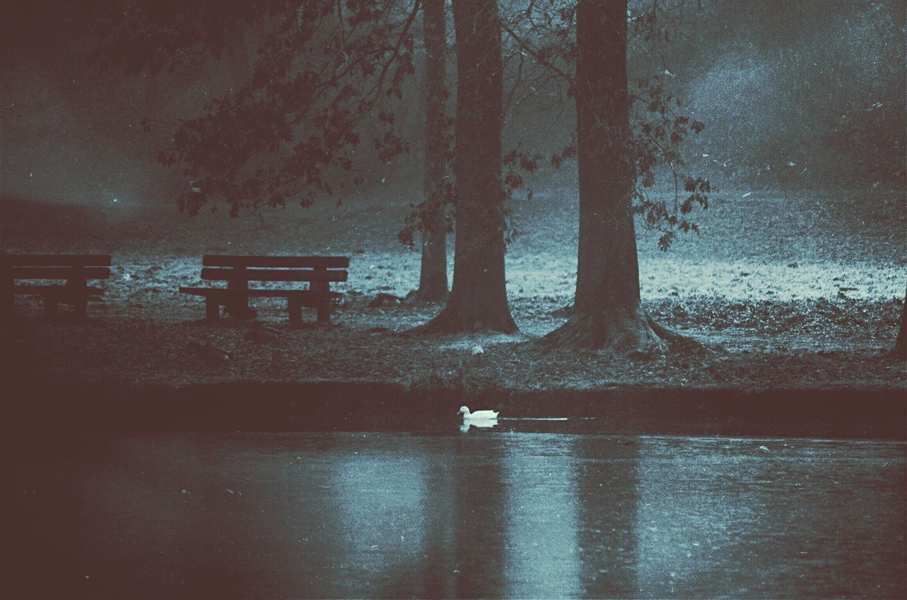 i met an angel 😇 MyArt White Bird Nature At The Lake Atmospheric Mood Atmosphere Animal Themes Mextures Wild Animal Illusion Wildlife Duck Life Park Paradise Eye4photography  EyeEm Gallery EyeEm Best Edits Moonlight Animal Photography Northgermany Drastic Edit Grain Monochrome Tranquility Water Bird