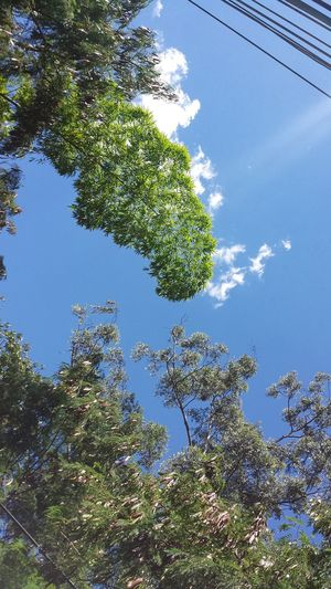 # #arabescos #BONE #bones #Colombia #Envigado #flower  #flowers #GalaxyS4 #glasses  #Gold #Jaw #jeans #Lens #light #macro #MacroShot #Nature  #Skull #sunset #sun #clouds #skylovers #sky #nature #beautifulinnature #naturalbeauty #photography #landscape #texture #vintage #water #Wood #Yesplease