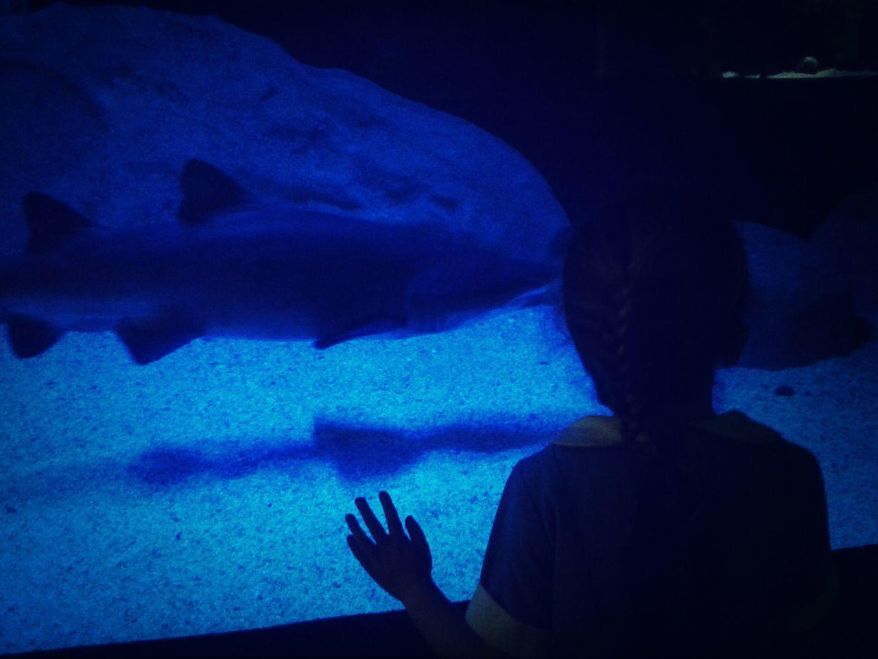 Aquarium Shark Blue Ocean V & A Waterfront