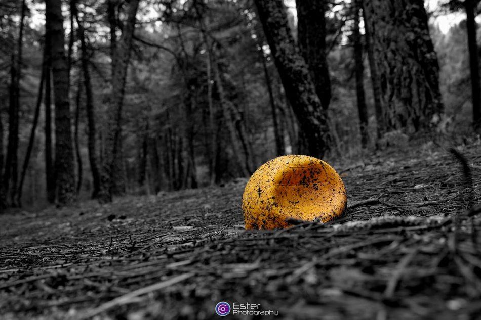 Game over. Forest Of Lost Souls Colorsplash Eye For Details Eye4photography