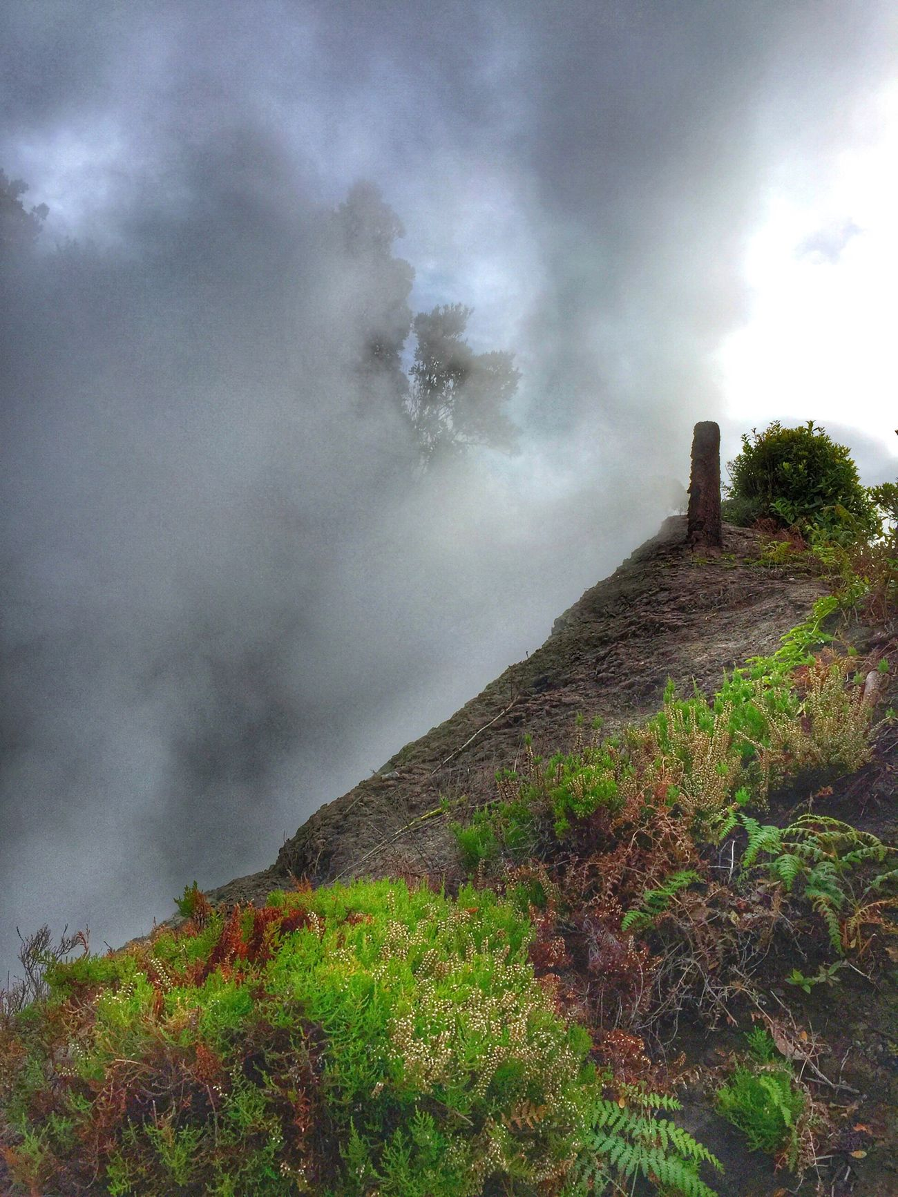 Furnas thermal hot springs. Nature Natural Beauty Hot Spring Steam Smoke - Physical Structure Low Angle View No People Tree Azores Landscape Nature_collection Plants Natural Phenomenon NaturalBeauty