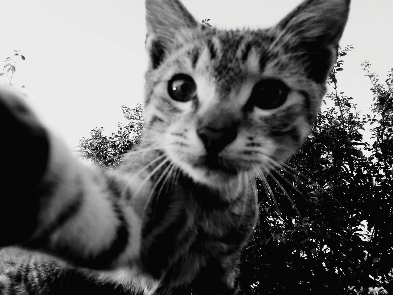 My cat's Selfie First Eyeem Photo