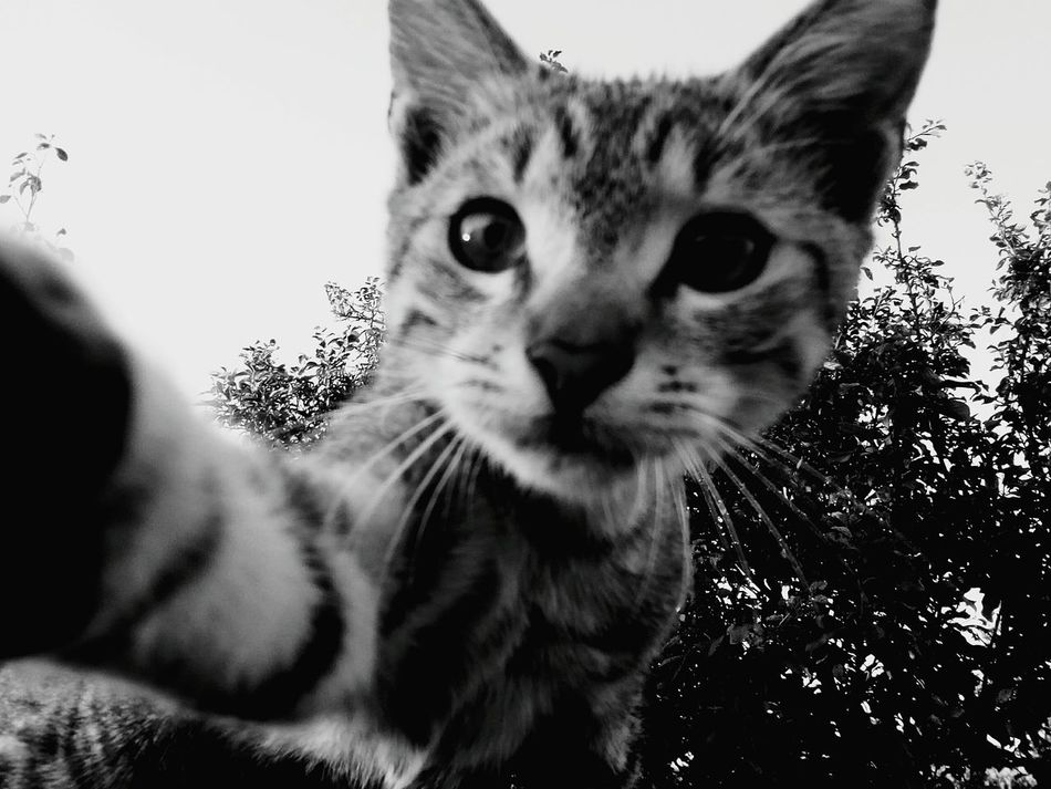 My cat's Selfie First Eyeem Photo