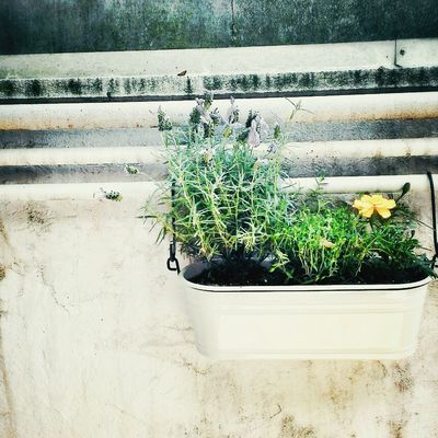 potted plant in Kyoto by マインド亀