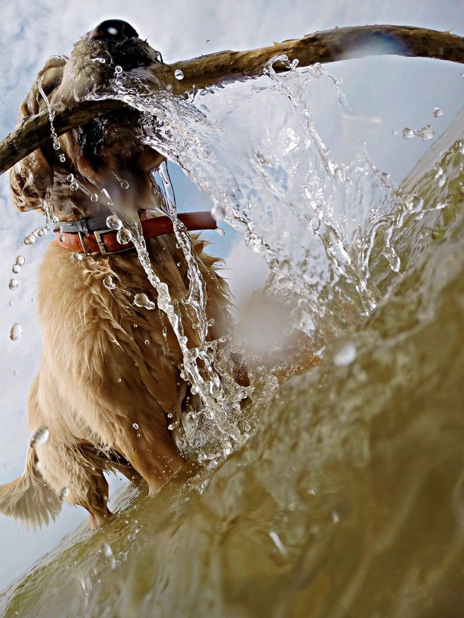 Beautiful stock photos of action, Animal Themes, Day, Dog, Domestic Animals