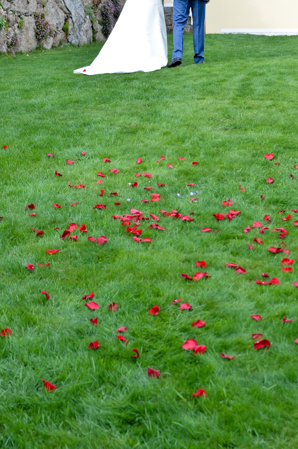 Beautiful stock photos of rosen,  Adult,  Bride,  Bridegroom,  Day