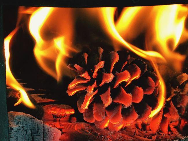 şömine Ateş Kozalak Sıcak Alev ısınmak Romantic