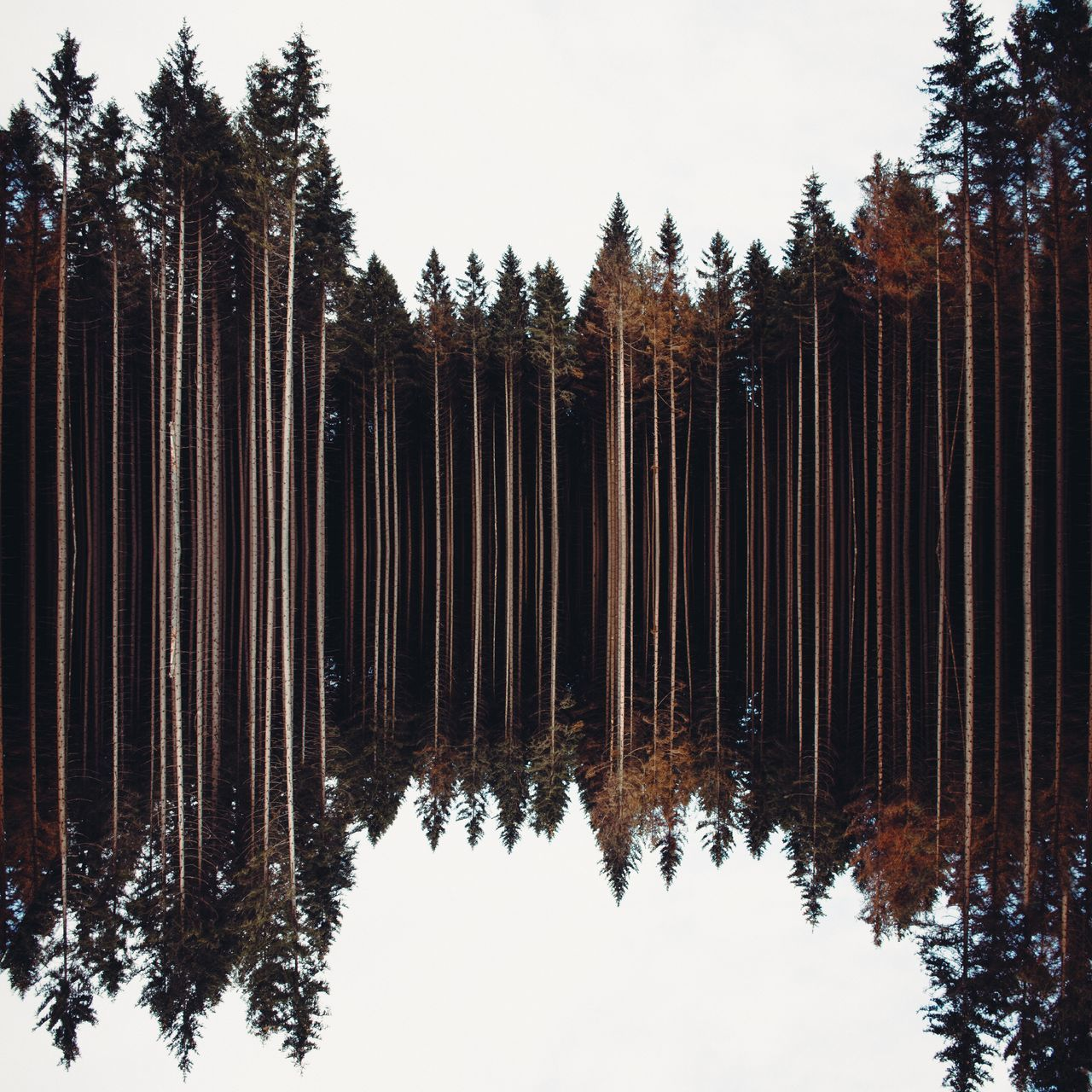 Woods harz brocken Nature forest outdoors day Tree woods Travel Wanderlust Reflection reflections no people POTD picoftheday photooftheday sky abstract ArtWork artworks germany europe Sachsen-Anhalt EyeEmNewHere
