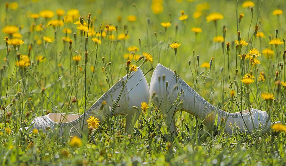Background Beauty In Nature Bride Shoes Celebration Close-up Day Dendelion Fashion Fashion Details Field Flower Grass Green Color Growth Meadow Nature No People Outdoors Plant Springtime Wedding Shoes White Shoes