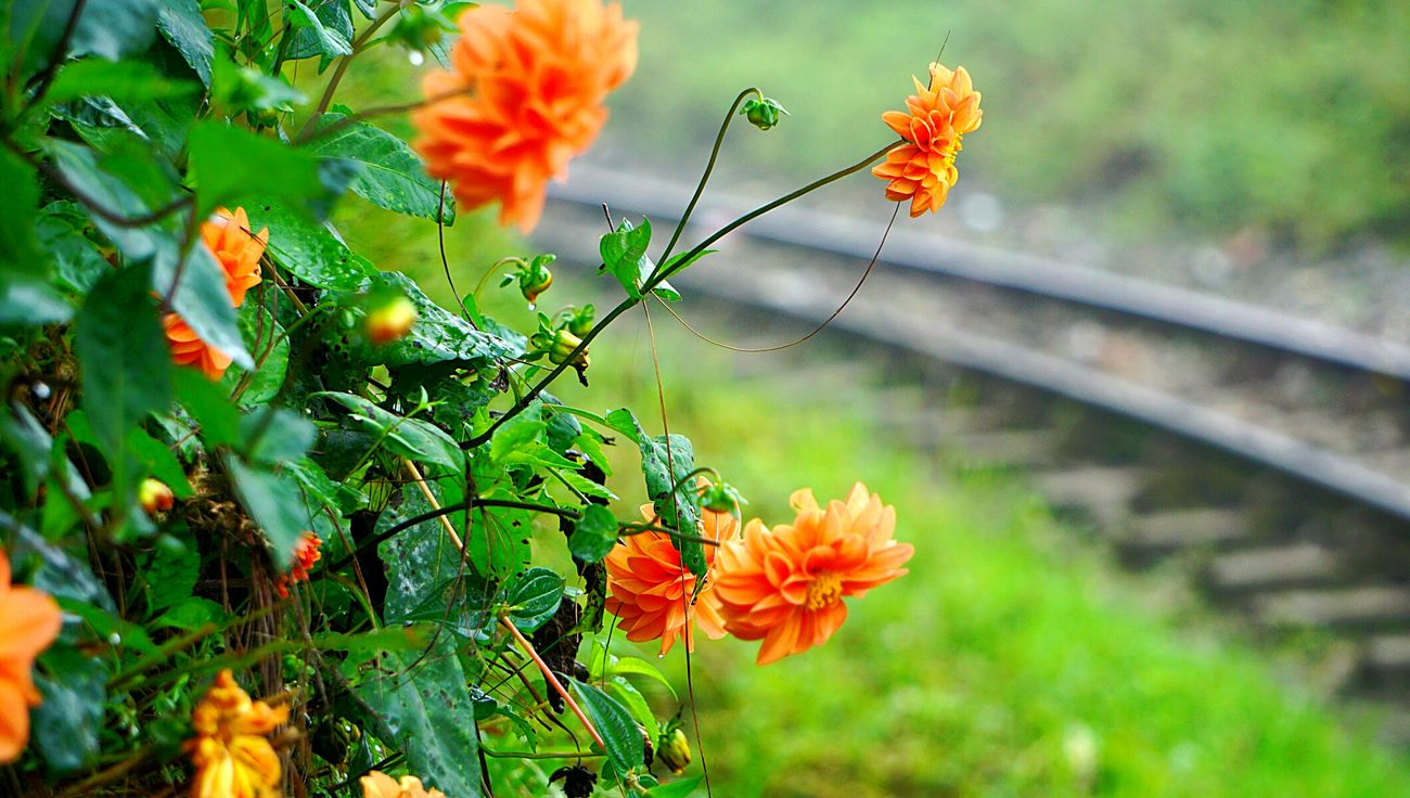 Plant Flower Nature Close-up Beauty In Nature Flower Head Sony A6000 SonyAlpha6000 The Places I've Been Today Travel Nature India Travelphotography The Week On EyeEm The Week On EyeEm 47