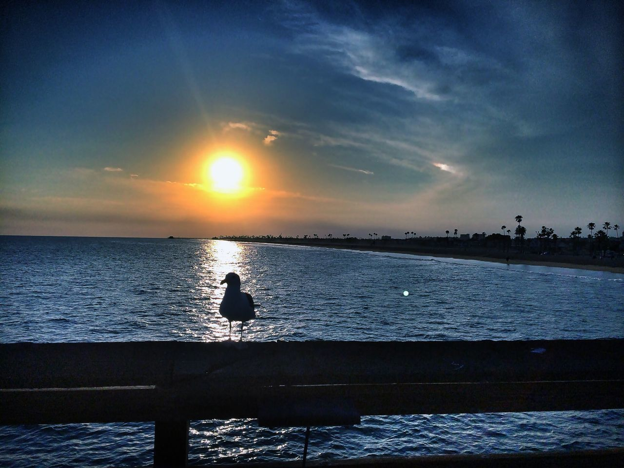 Seagull Perching On Railing By Sea During Sunset