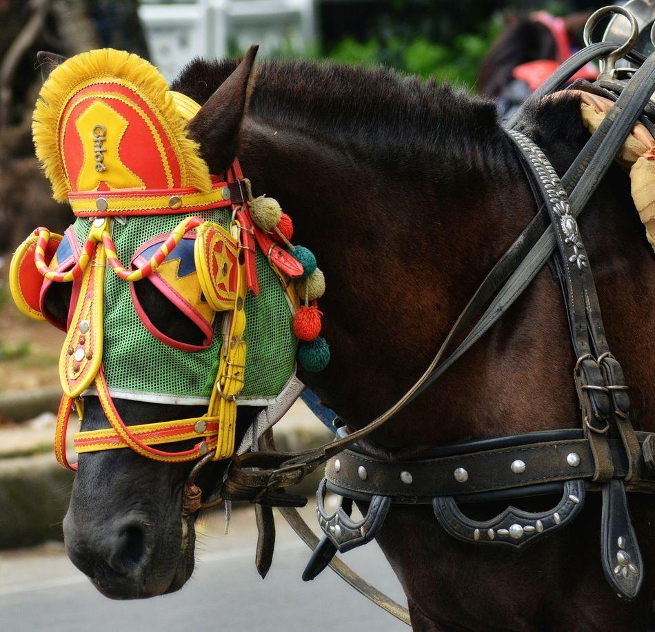 Horse Life Animal Themes Horses Horse Mask Horse Animal Animal Head  Animal Portrait Animal Life Workhorse Delman