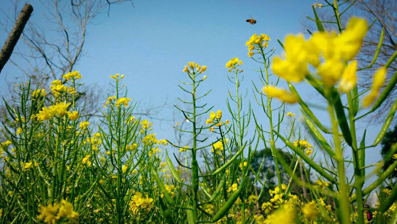Yellow Flower Growth Nature Plant Field Beauty In Nature Fragility Springtime Blossom Outdoors Freshness Flower Photography Flowers, Nature And Beauty MIphotography Flower Head Growth Nature Petal Low Angle View Blooming Blue