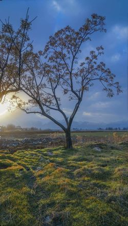 Paintings Bekaa Valley Lebanon Trees First Eyeem Photo